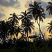 sunset over palm trees by royalraf