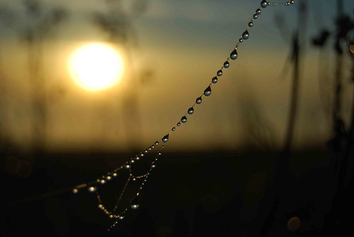 sunset web