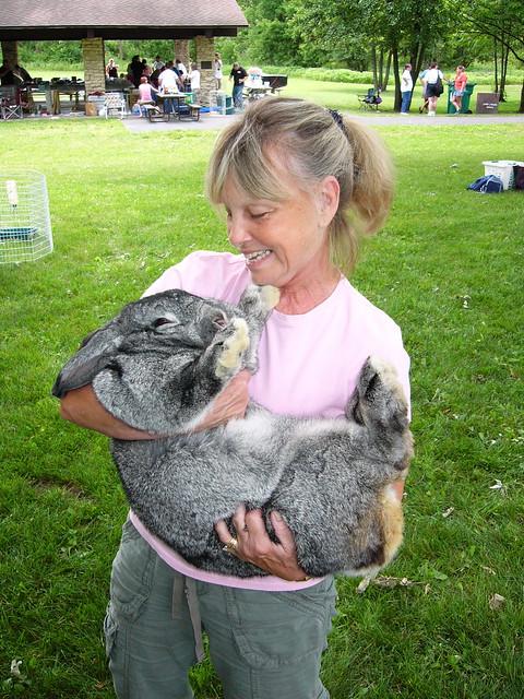flemish giant rabbit and dog - photo #6