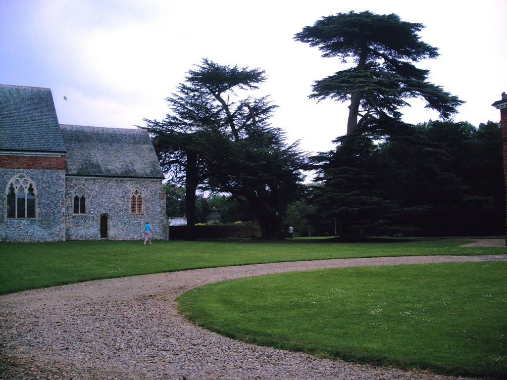 Book 1, Walk 23, Otford to Eynsford Yew trees in the grounds of Lullingstone Castle. D.Allen. Vivitar 5199 5mp