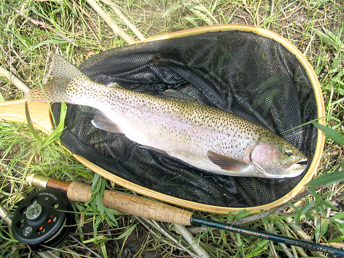 fly fishing trout tips