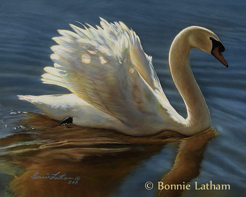 Tranquility Mute Swan Painting By Bonnie Latham A