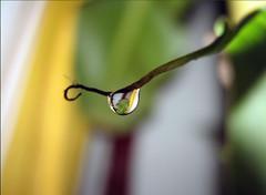 Nature's Teardrop