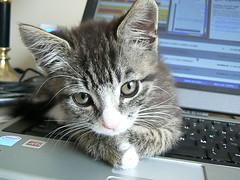 Cute little kitten sitting on my laptop