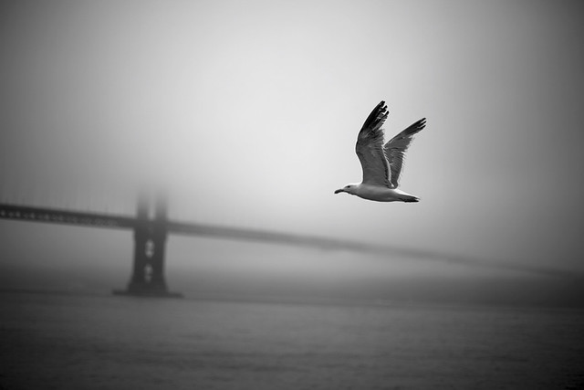 Misty Morning in SF