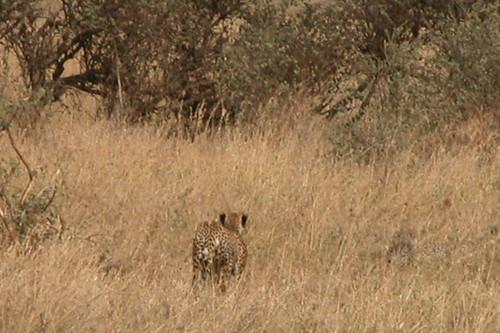 geotagged tanzania safari serengeti geo:lat=2001840995602471 geo:lon=3494431277636546