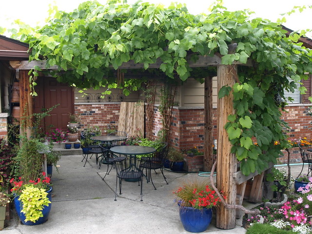 Pergola With Vines : pergola with grapes  Flickr - Photo Sharing!
