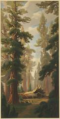 Big Trees, Calaveras Grove