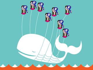 Curiosa-Fail Whale