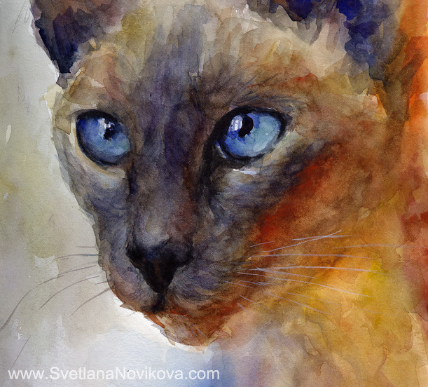 siamese cat novikova painting