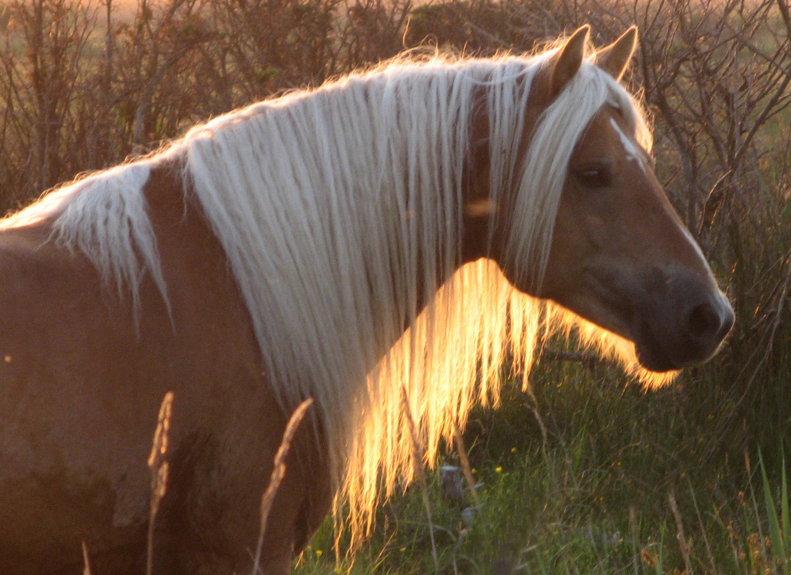 Back to photostream for Beautiful horses