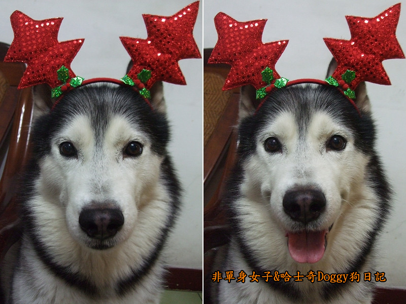 Doggy聖誕節紅色聖誕樹髮箍裝扮12
