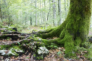 bohinj forest