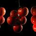 tomato by Sergey_Zaytsev