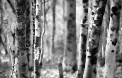 2016 ~ TREE PROJECT