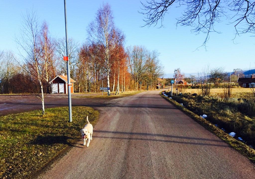 hundpromenad_röttle