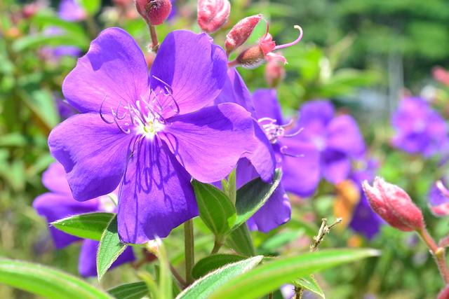 A beleza das flores