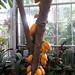 20130307_155758 United States Botanical Garden Conservatory