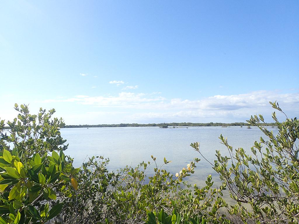 Laguna de las Salinas  Cuba