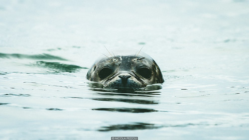 ocean road trip travel sea summer baby beach water look animal reflections iceland eyes seal hofn stokksnes ìsland