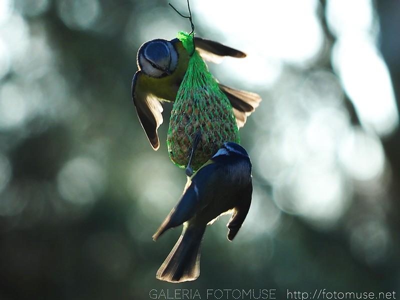 Dance of birds life