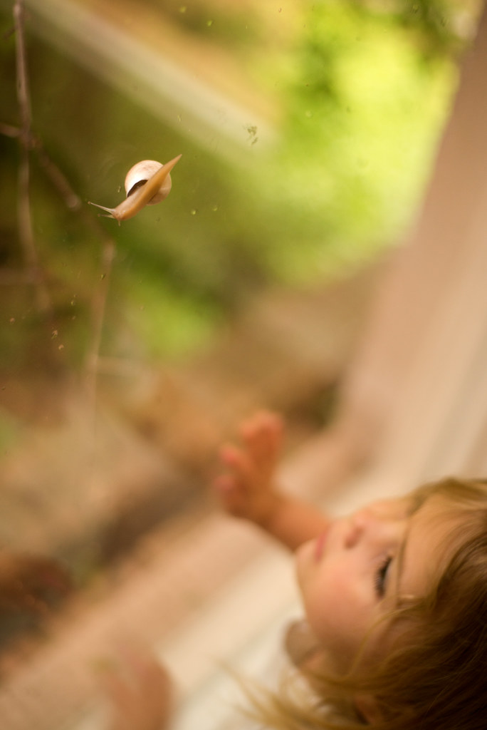 Snail on the Window