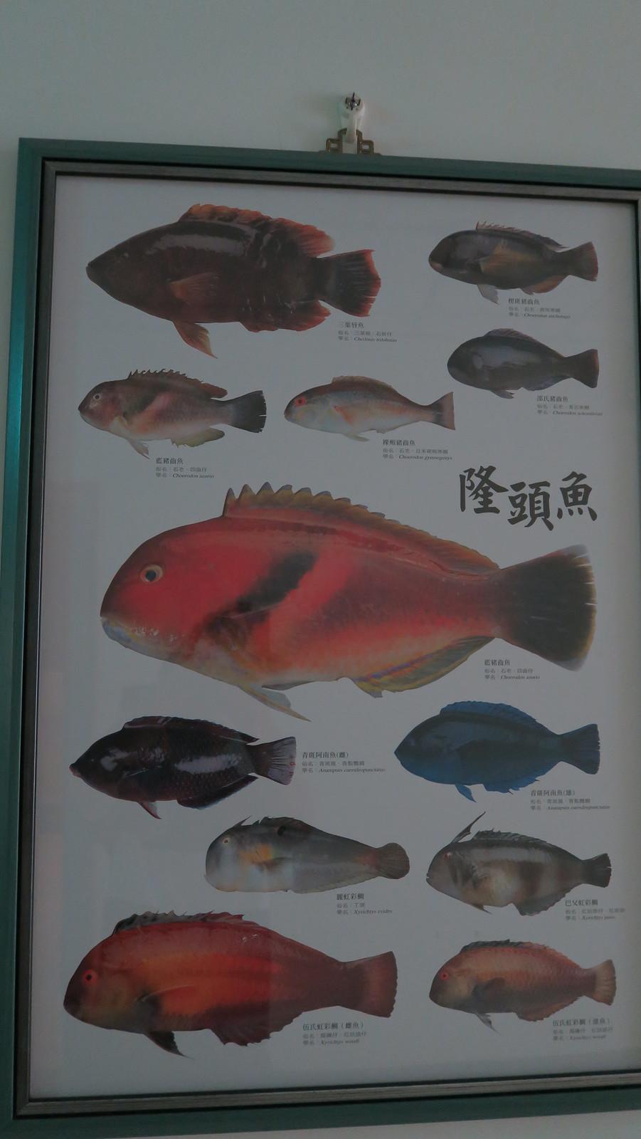 雲林斗六朝露魚舖 (34)