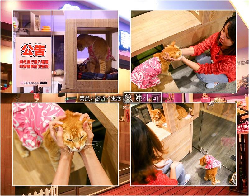 貓故事和食坊-喵喵【新北市新莊餐廳】貓故事和食坊-喵喵,點主餐可享飲料喝到飽、白飯免費續!輔仁大學旁的貓咪餐廳