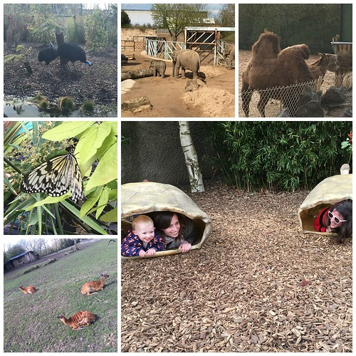 Chester Zoo 2 Collage
