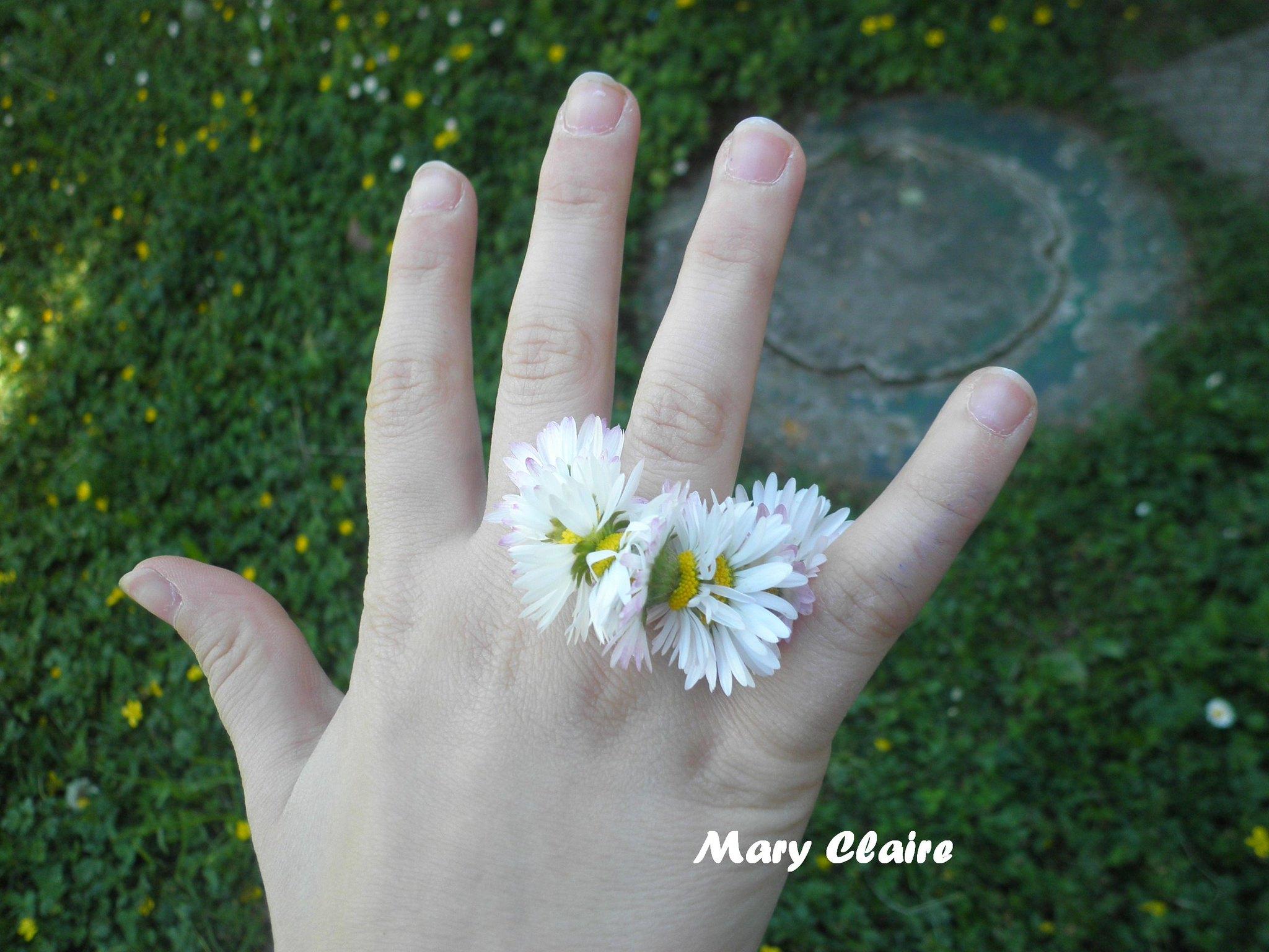 anello di margherite