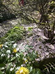 Japanese garden, Gärten der Welt, Berlin-Marzahn