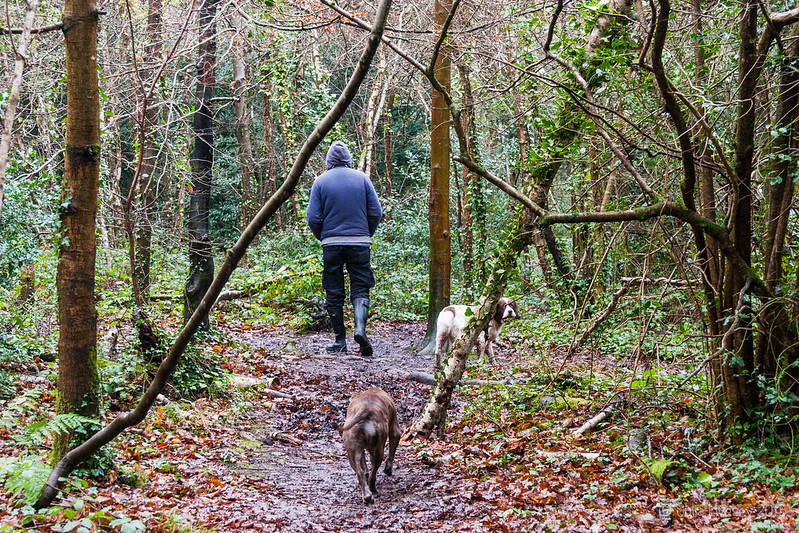 A Christmas day walk in Delph Woods