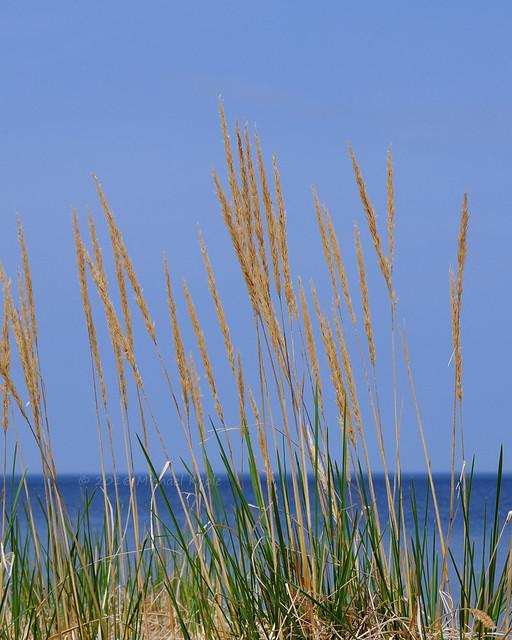 Visions Past - Lake Superior Dune Grass