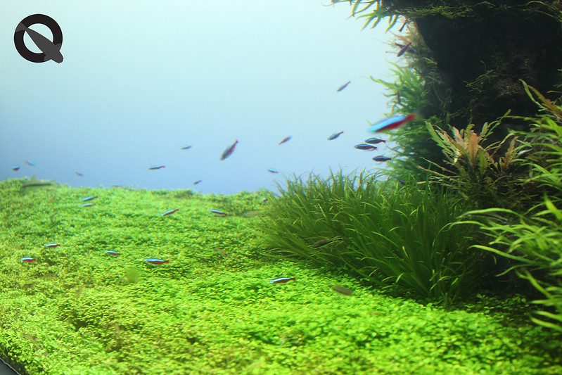 KQ Sumida Aquascape 3