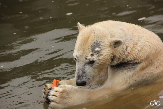 Wasserspaß für Tonja+Wolodja Tierpark 06.03.201615