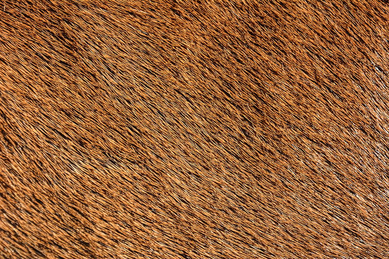 animal-fur-closeup-texturepalace-1