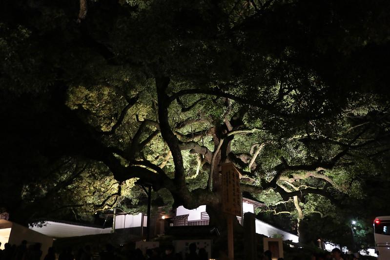 20141122-武奈ヶ岳&京都ライトアップ-0547.jpg