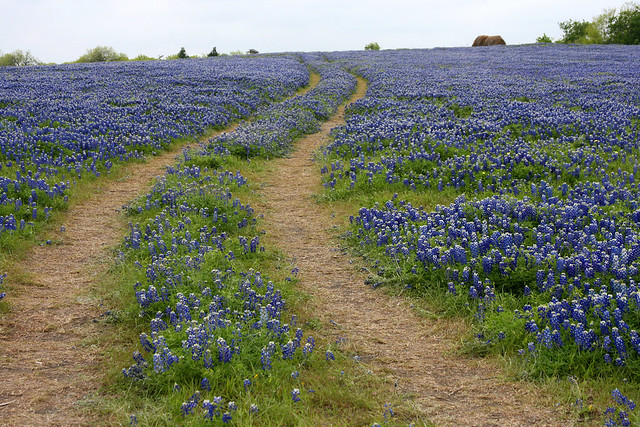 Blue Bonnet Road