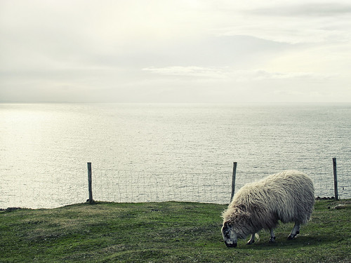 Sheep of Ireland #02
