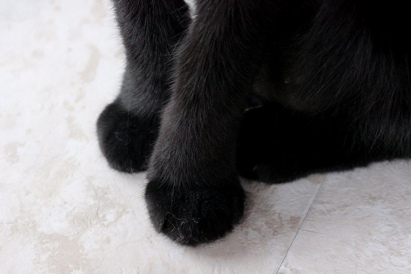 Project 366, Day 24: Furry Paws