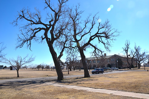 Trees at Fort Reno hdr
