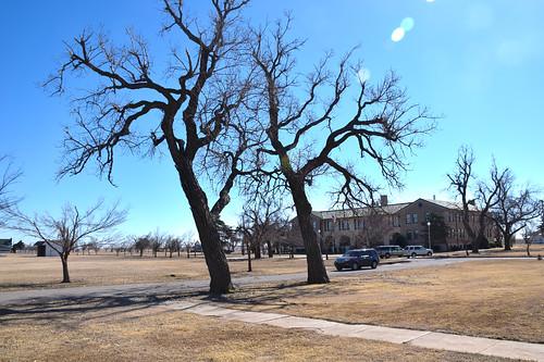 Trees at Fort Reno hdr