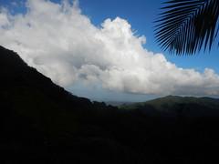 PN El Yunque, Luquillo, PR