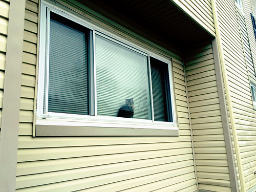 Cat in Window (March 14 2015)