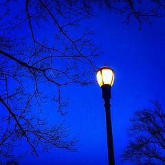 Blue Sky and a light #clovelakespark #jcp #joechahwanphotography #nature #spring #NYC
