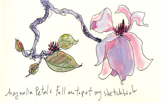 Sketchbook #94: Magnolias