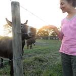 rosa&goat