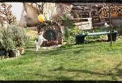 Helwen & le ballon de baudruche