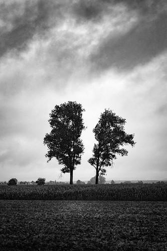 Doppelbaum