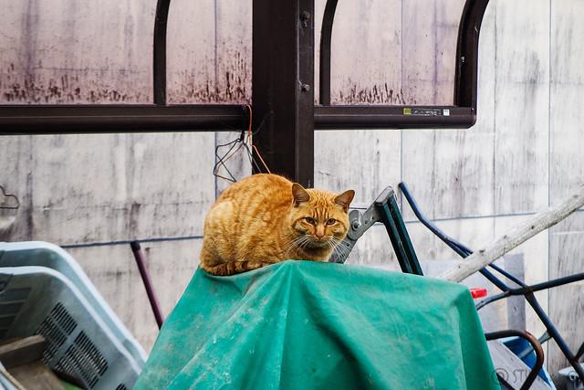 Today's Cat@2016-03-26
